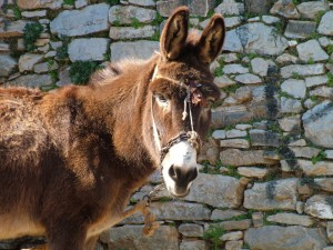 shocking the donkeys