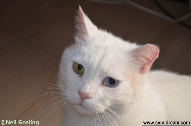 jack cat portrait