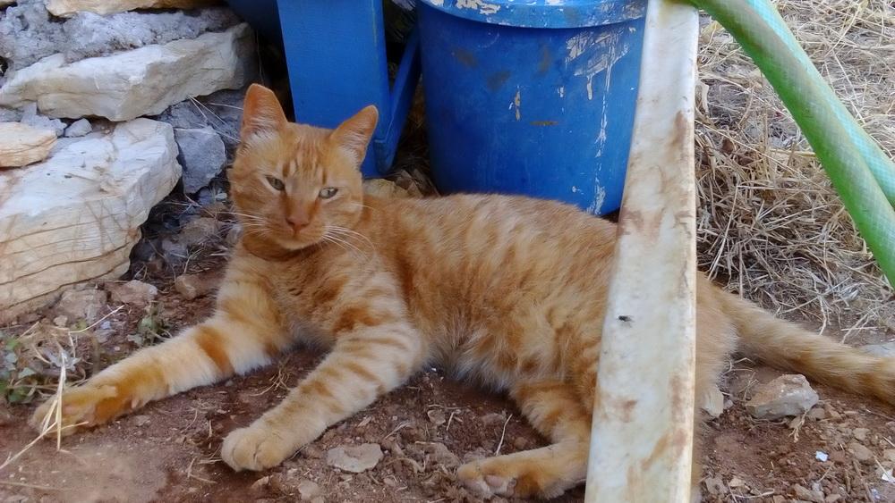 Symi Animal Welfare