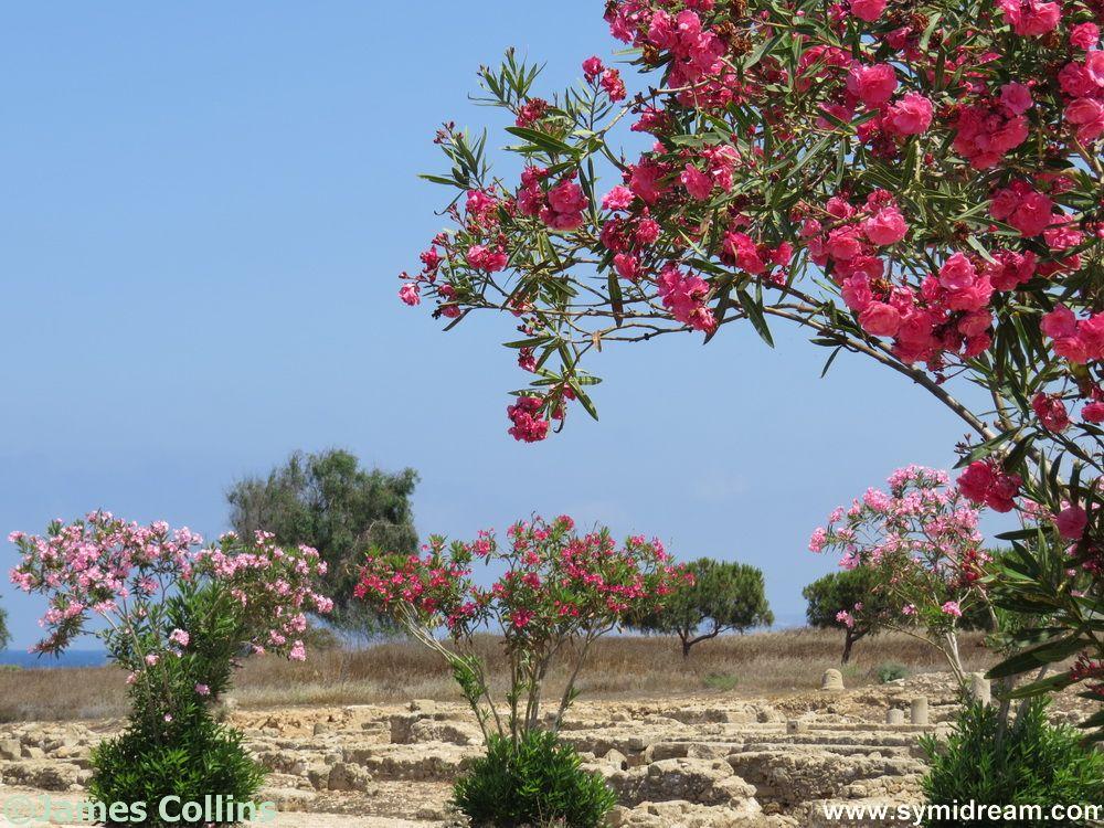 Girl Gone Greek Cyprus
