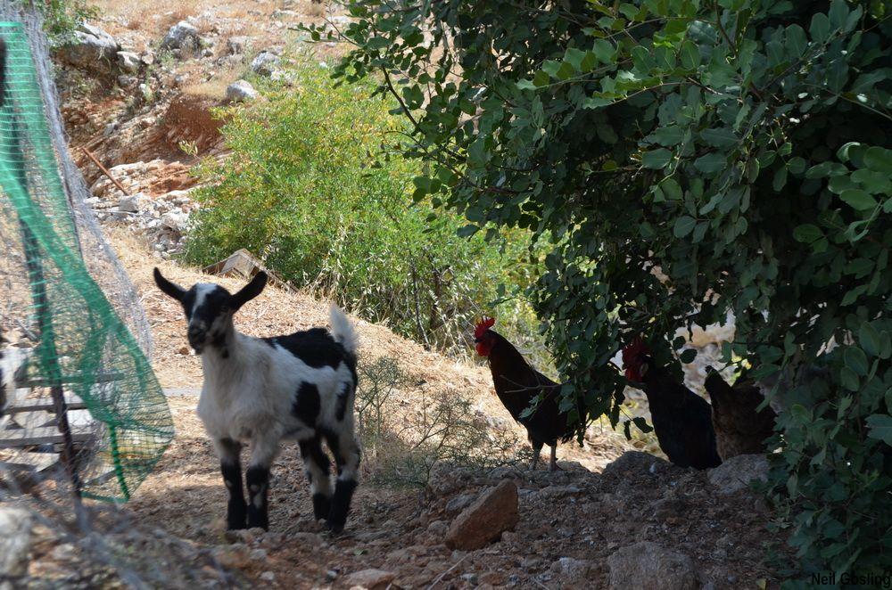 Walking in the Pedi Valley