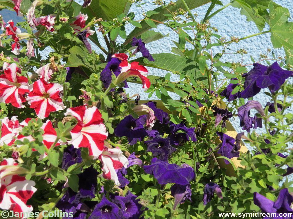 Symi Summer Colours
