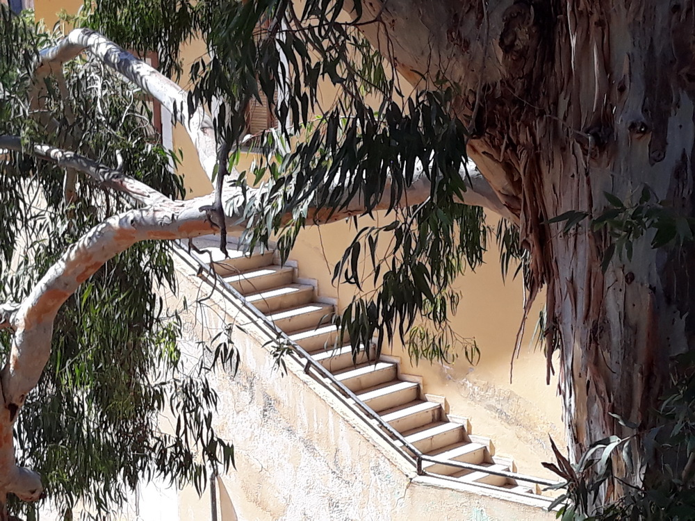 Steps and trees