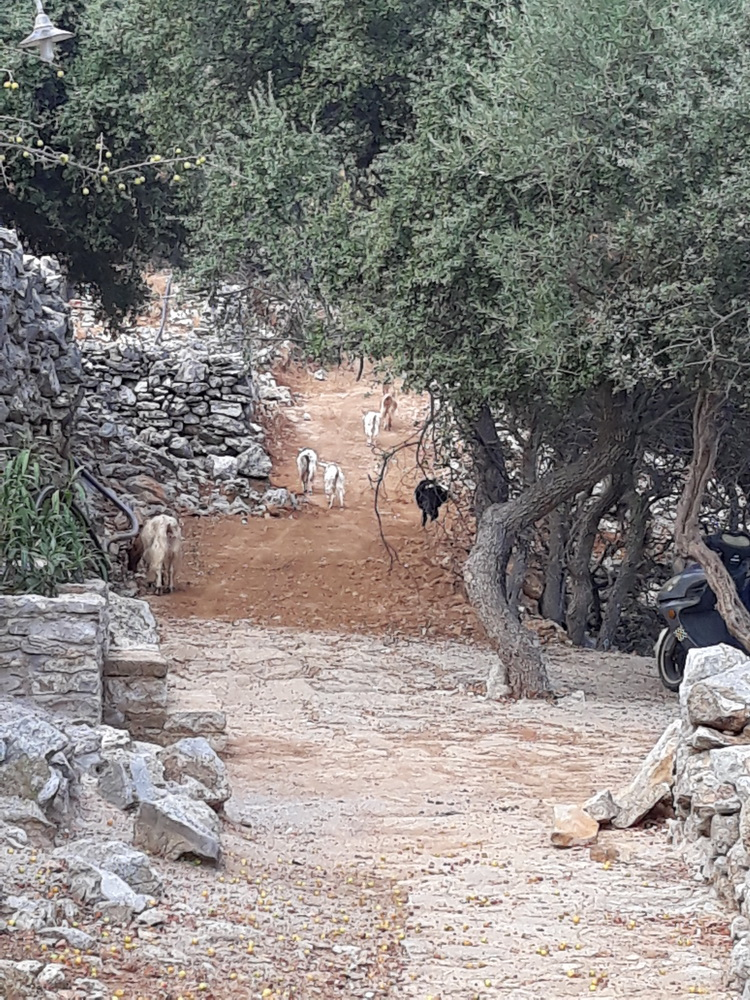 There was something of a tailback on the Xissos path which was undergoing some changes…